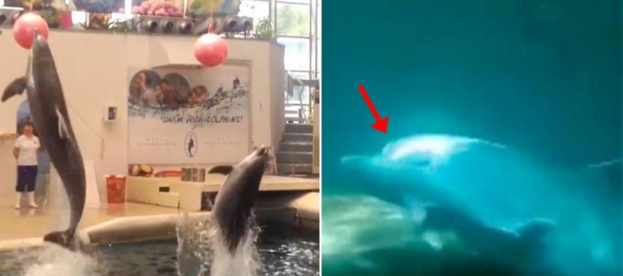Bayi Lumba-lumba Tewas saat Pertunjukan, Muncul Petisi Online